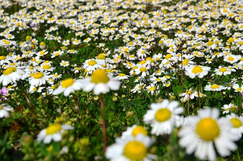 Sıcak hava ile beraber baharın müjdecisi çiçeklerle doğa canlandı