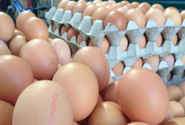 Bakanlık zehirli yumurta konusunda açıklama yaptı