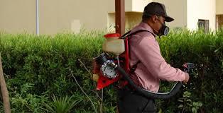 Böcek ilaçlama hizmetleri