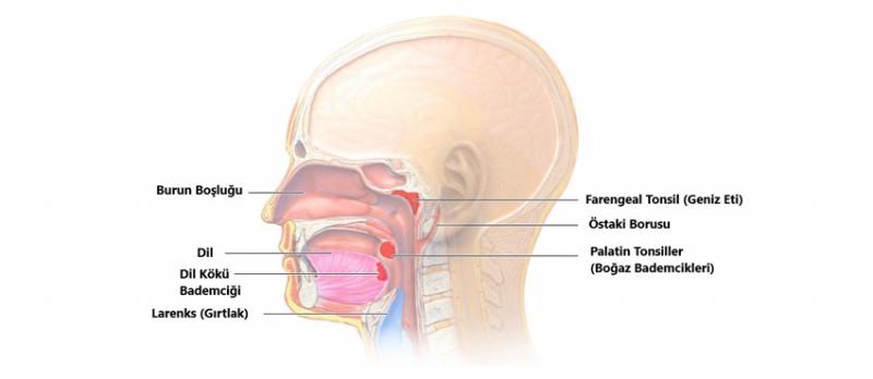 Dil Kökü Ameliyatı Horlama ve Uyku Apnesine Çözüm