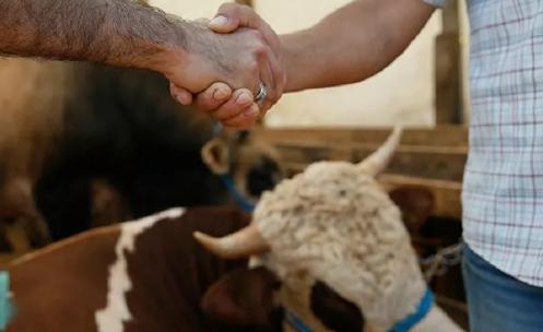 Elde kalan kurbanlıkları Et ve Süt Kurumu satın alıyor