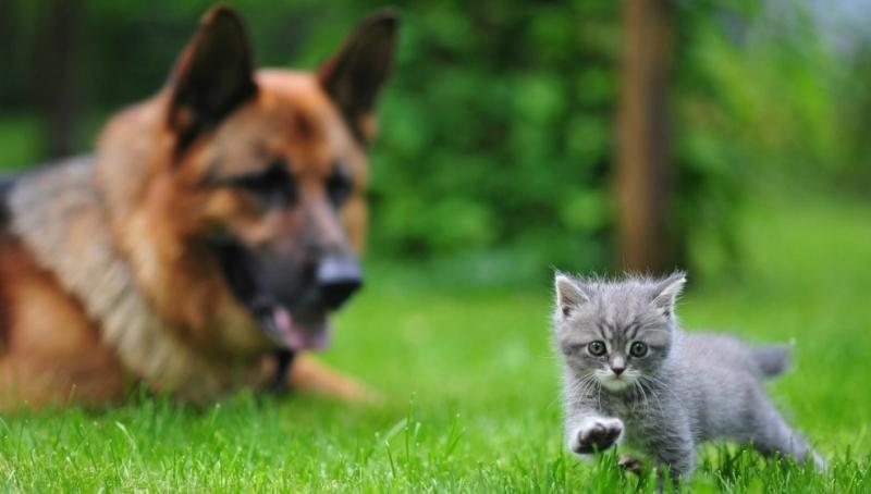 Kedi Köpek Mama Merkeziniz