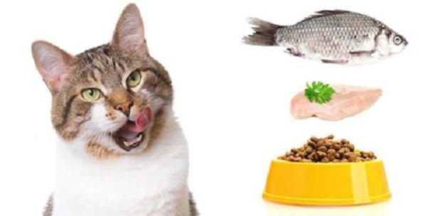 Kısırlaştırılmış Kedi Maması Hangi Amaçla Kullanılmaktadır?