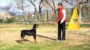 Köpek Eğitiminde En Seçkin Adres