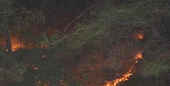 Kozan'da yangın çıktı