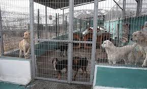 Kütahya Belediyesi hayvan barınağında korkunç iddia!