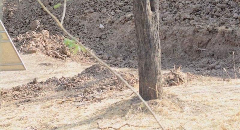 Leoparın gizlendiği bir vahşi doğa fotoğrafı
