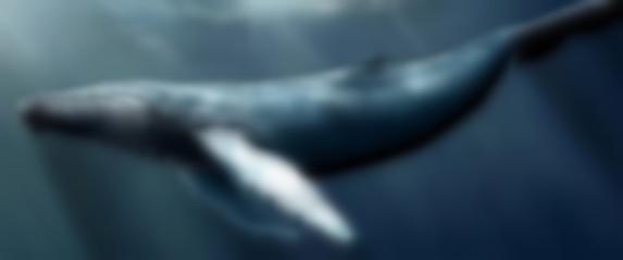 Mavi balina yine can aldı