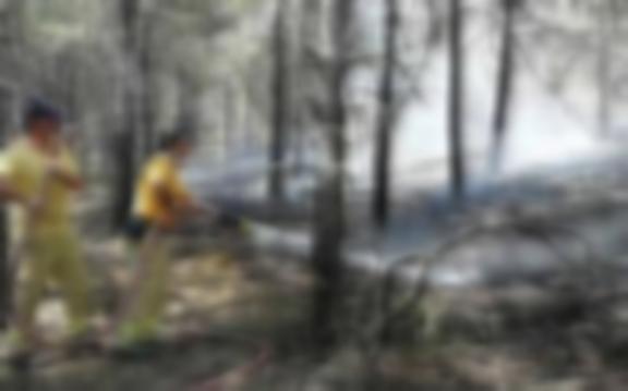 ODTÜ ormanında yangın çıktı