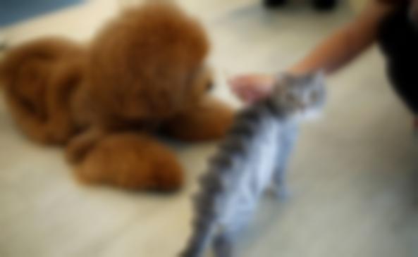 Pet shop'ta kedi ve köpek satışına yasak