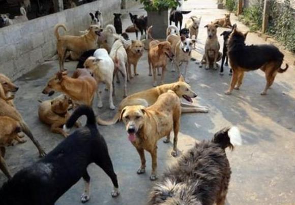 Sivas'ta sokak köpekleri zehirlendi