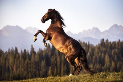 At Besiciliği İle İlgili Merak Ettikleriniz