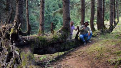 Bir gövdede 18 ağaç