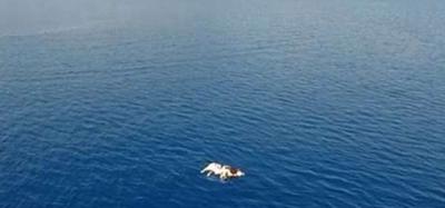 Deniz de bir inek ölüsü