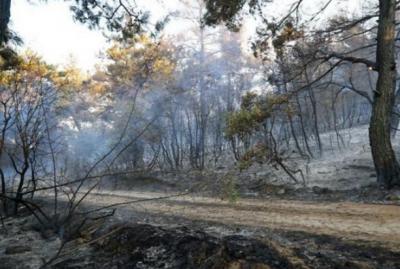 Edirne'de ormanlık alandaki yangın söndürüldü