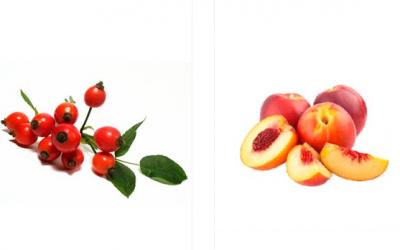 İyi Meyve Fidanı Nereden Alınır?