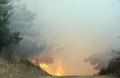 İzmir ve Manisa'da yangın