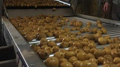 Patates üreticileri