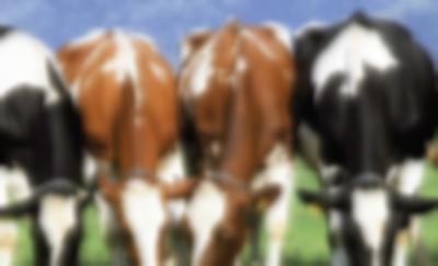 Rusya'dan sığır eti tedarik edilmeye başlandı