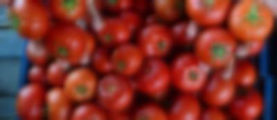 Türkiye'nin gönderdiği domatesler iade edildi