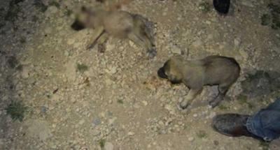 Yavru köpeği bıçaklayıp taşla ezdi